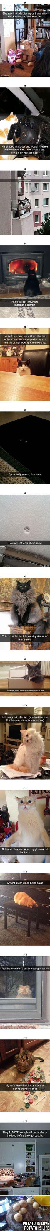 15 lustige Katzen-Snapchats, die Sie benötigen, um richtigen Meow zu sehen