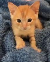 Kleines orange Kätzchen – kühles Cat Tree House   – Cute animals
