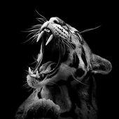 Tiere in Schwarz und Weiß von Lukas Holas