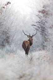 Ein Hirsch alleine im verschneiten Wald, würde ic…