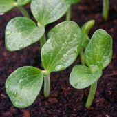 10 tips for sowing