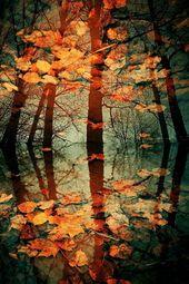 Herbstfarben – Victor Eredel