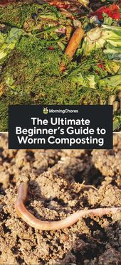 The Ultimate Guide to DIY Worm Composting for Beginners   – Composting
