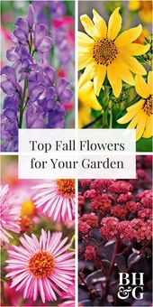 8 Fall-Blooming Native Plants We Love – Yard Ideas