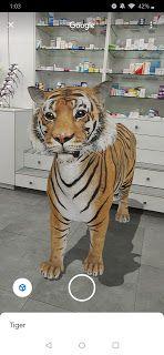 خلفيات ايفون نمر Wallpaper Hd Iphone Animals Wallpaper Tiger