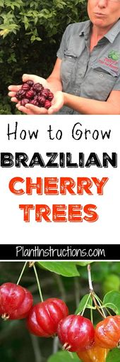Wie brasilianische Kirschbäume wachsen   – Tropical Garden