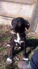 Ole Hund Mischlingshund In Ungarn Tierheim Tiere Hunde