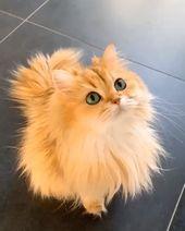Follow Us Kittens Family Family Follow Kittens Cats Pretty Cats Cute Animals