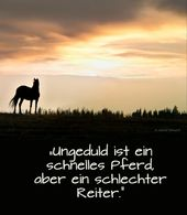 ▷ 1001 + ideas about beautiful horse pictures and horse sayings