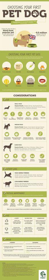 Wenn Sie auf der Suche nach Ihrem ersten Haustierhund sind, schauen Sie sich dieses Infogr …