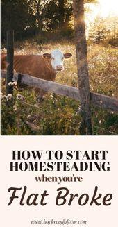So starten Sie Homesteading, wenn Sie pleite sind – – Homestead Tips