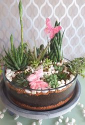 Succulent shell: Get the garden into the house with the easy-care exotics!   – Dekoliebe