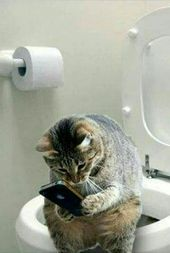 Cat checking iPhone on toilet