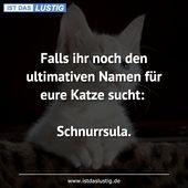 Falls ihr noch den ultimativen Namen für eure Katze sucht: Schnurrsula.