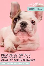 Podcast Episode 32 Wagmo Provides Insurance For Dogs With Pre Existing Conditions Dogs Pets Dog Friends