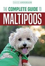 Maltipoo Characteristics Appearance And Pictures Maltipoo Dog