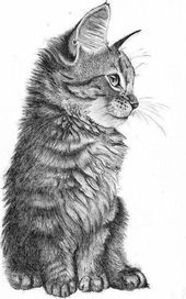 Zeichnen lernen mit Bleistift – Kunst selber machen   – Zeichnen lernen