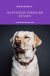 Stress beim Hund: Entstehung und Lösungen | Pfötchentraining