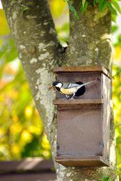 Cuelgue cajas nido de pájaros correctamente   – Natur