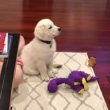 A Golden Retriever Puppy Can't Get Enough of Disney Movies, and Same Here! – Food