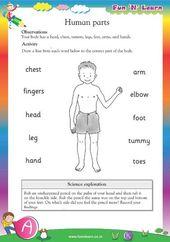 Human Parts Hkg Worksheets Human Body Worksheets Kindergarten Science Science Worksheets