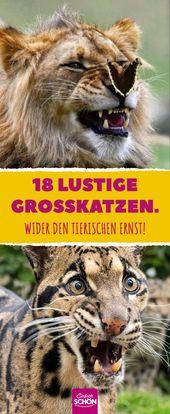 18 lustige Großkatzen. Wider den tierischen Ernst! #tiergeschichten #großkatze… – Tiergeschichten