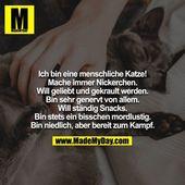 … – lustig – #   – Katzen