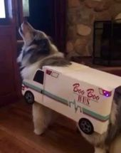 This pup wants to be an Ambulance for Halloween! 🐾 #booboobus – ratten
