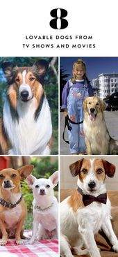 Here Are 8 Of The Most Memorable And Lovable Dogs From Tv Shows And Movies Famous Dogs Dog Movies Dogs