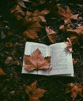 Herbst lesen   – Autumn Vibes