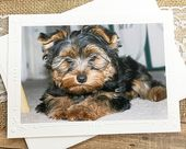 Yorkshire Terrier Photography Card, Dog, Puppy, Cute, Fluffy, Note, Pet, England, Embossed Border, Birthday, Thinking of You – 7″ x 5.25″  – Pets