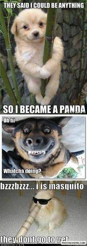 Funny Baby Animals: 15 imágenes relajantes que no podrás resistir   – Hunde Bilder