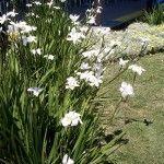 tropical plants for sale tropical garden Melbourne at Chris and Marie's plant …,  #Chris #G…   – Tropischer Garten