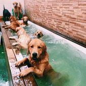 El verano interminable – #el # verano # sin fin   – Süße Hundebilder – Sweet Dogs! funny dog pictures! Lustige Hunde!