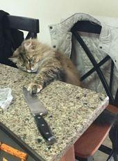 19 Dinge, die Sie nur verstehen, wenn Sie eine Katze haben   – cats! – #cats #die #DINGE #eine #haben