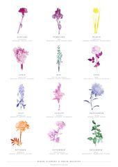 Was ist deine Geburtsblume? Ein monatlicher Leitfaden birth flowers
