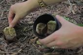 Dig up your used tea bags in the garden and this happens. Totally genius…  – Kuchen rezepte ausgefallen