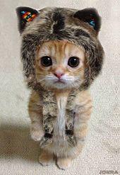 14 raisons pour lesquelles les chats sont les PIRES animaux que la terre ait jamais porté… Vraiment.