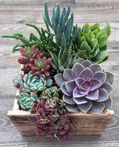 Association succulent (en anglais seulement) Plantes succulentes vivantes (en anglais seulement) Reside Succulent Association (en anglais seulement) Cadeaux de Noel Cadeau d'anniversaire Pièce maîtresse
