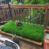 Auf meinem Balkon habe ich einen winzigen Weizengrashof für meine Jungs gepflanzt …,  #auf … – Katzen