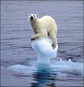 26 Ideas De Deshielo Cambio Climático Cambio Climatico Climatico Subida Del Nivel Del Mar