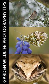 Tipps zum Fotografieren von Wildtieren im Garten   – Nature Photography