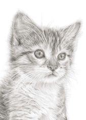 Kitten Art Print | Cat drawing | Cat art print | Gift for Cat lover | Kitten picture | Cat Art | Cute Kitten Picture | Nursery Animal Art