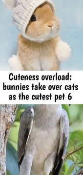 Cuteness overload: bunnies take over cats as the cutest pet 6