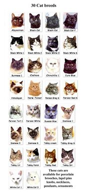 Some Top Unusual Cat Breeds on Earth – Cats