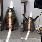 Cats_funny #Cats_breeds #Cats_cute #black_Cats #Cats_diy #Cats_photography  – Funny Cats