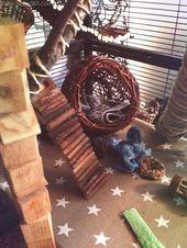 Creativo y espectacular La divertida rata del animal y la jaula   – Süße Tiere