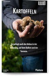 Basilikum: Im Garten selbst anbauen