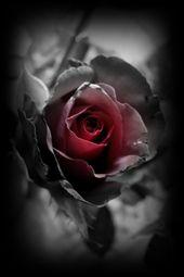 ミステリー-城   – Rosen (Blumen )