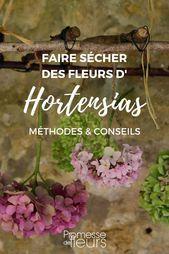 Comment faire sécher les fleurs d'hortensia – Tutoriel